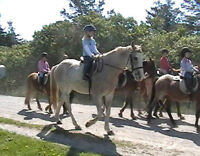 Horse and pony Summer camp