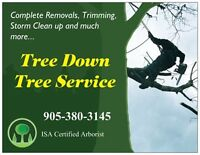 Tree Down Tree Service -Free Quotes-