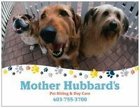 Mother Hubbard's Pet Sitting & Day Care