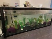 5ft Fish Tank NEED GONE!