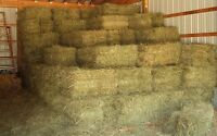 Oat straw and hay square bales