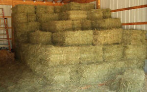 Looking for 60 Square Straw Bales!!