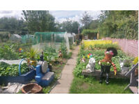 We need your votes for our new community garden