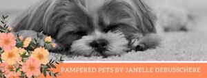 Pampered pets  Bow - tie