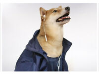"""Canine Cardio"" - Dog Walking Service * First walk half price *"