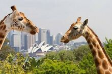 Taronga Zoo tickets discount price, $35 for adult Lalor Park Blacktown Area Preview