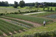 5 acres of farm land for lease in Leppington Leppington Camden Area Preview