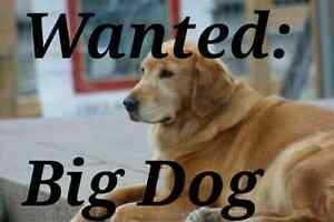 WANTED: Large dog for a new home and loving workplace. Haberfield Ashfield Area Preview