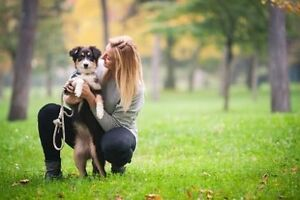 Dog Walking/ Pet Sitting Canning Vale Canning Area Preview