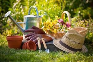 We do gardening starting from $20 a hour Flinders Park Charles Sturt Area Preview