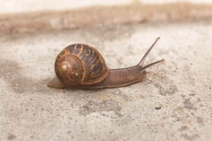 Wanted: LOOKING FOR GARDEN SNAILS
