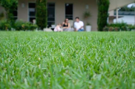 Wanted: WANTED: Buffalo lawn/grass (approx 7m2)