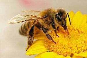 Beekeeping hands on workshop. Sunday 21 May 2017 East Maitland Maitland Area Preview
