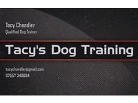 Tacy's Dog Training - Positive, reward based training for pups & their humans