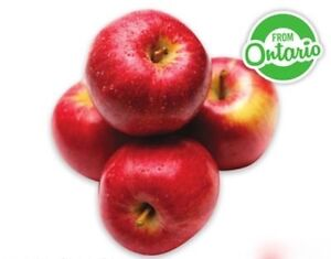 Like eating apples? Join our study - up to $300 compensation! Cambridge Kitchener Area image 1