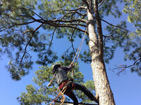 TREE REMOVAL SERVICE ( 416 834-6426 )