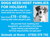DOG HOST FAMILIES WANTED Horsham