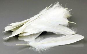 Goose Feathers Unique 100pcs natural goose feathers 15-20cm / 6-8inch White