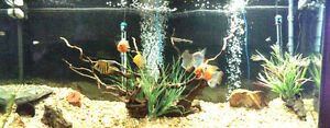 120 GALLON FISH TANK WITH STAND AND FISH