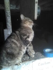 Barn Cats Looking for New Home or Barn To Live