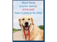 Wimborne Home from Home Pet Holidays & Dog Walking Service