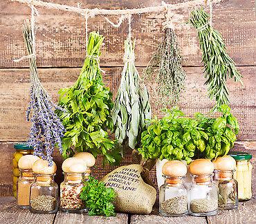 HoneyCombs Herbs and Vitamins