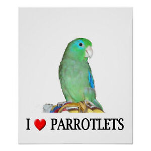 Looking for a parrot or parrotlet