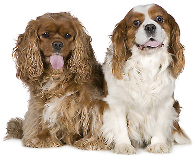 Find Best Dog Grooming Salons Near Me Animal Pet Services