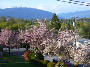 First class furnished room* for female roommate, BCIT/Burnaby