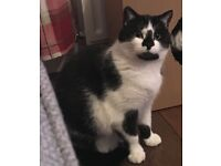 Loving home needed for 2 cats