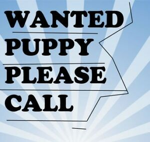 We want a new family member!