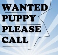 Puppy wanted !!!
