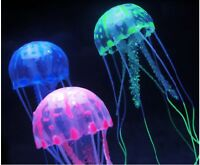 jelly fish for sale