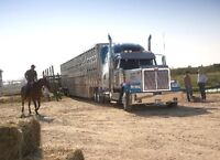 Class 1A Driver needed immediately hauling livestock.