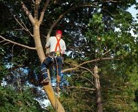 Tree Removal, Limbing, Climbing. Free estimate, fully insured.