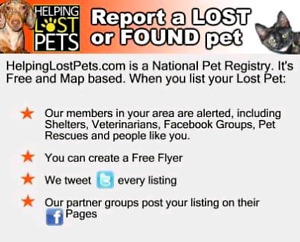 lost or found  pet