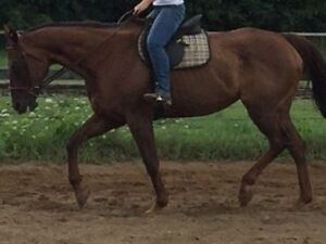 Sweet mare available for part board