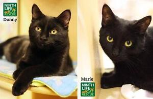 """Young Male Cat - Domestic Short Hair: """"Donny & Marie"""""""