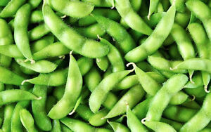 Soybeans(Edamame) | Jung Garden and Flower Seed Company