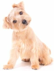 Acreage family looking for hypoallergenic dog