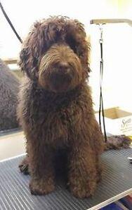 Home Based Dog Grooming