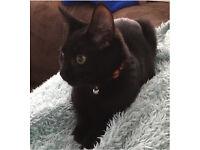 Lola - 1.5yrs (girl) CAT - George & Peppa 20weeks (boy & girl) KITTENS