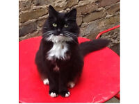 Missing black and white cat medium-long haired.
