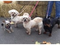 Reliable Dog Walker Bermondsey SE1 Rotherhithe SE16