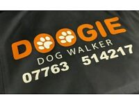 Doogie dog Home Boarding and walking