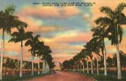 Vintage Miami Postcards