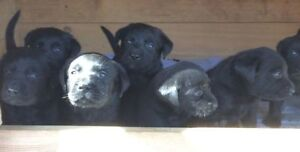 Wanted: Looking for a puppy for free or small rehoming fee