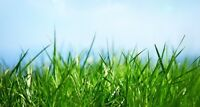 Lawn care/grass cutting services