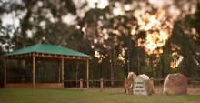 Burial Plots x 2 - Kemps Creek Catholic Garden Cemetery - Menai Sutherland Area Preview