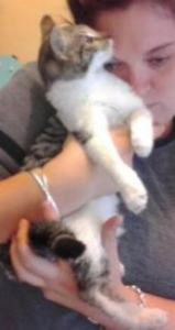 Zoe is looking for a place to call home - Male kitten Browns Plains Logan Area Preview